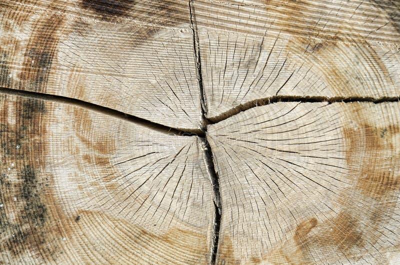 Σύσταση του κορμού δέντρων στοκ φωτογραφίες