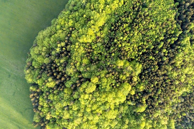 Σύσταση του μικτού δάσους μια ηλιόλουστη θερινή ημέρα κοντά στην περιοχή χλόης Εναέρια φωτογραφία dron στοκ φωτογραφία