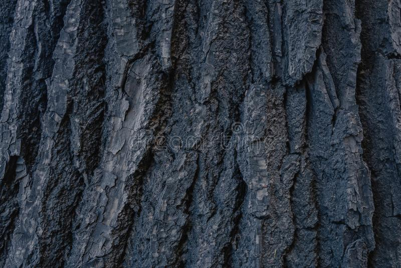 σύσταση του παλαιού φλοιού δέντρων αφηρημένη φωτογραφία του ξύλινου φλοιού δέντρων στοκ εικόνες
