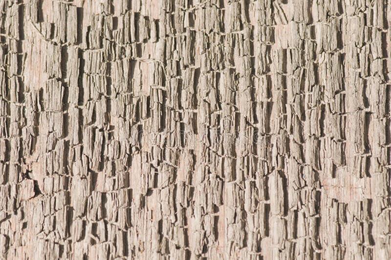 Σύσταση του παλαιού ξύλου στοκ εικόνα