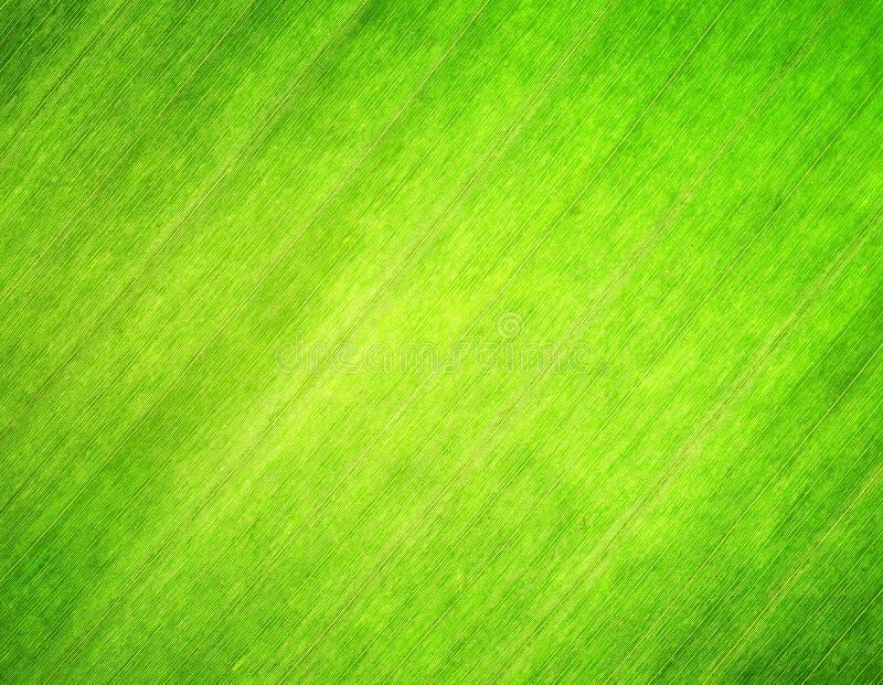 Σύσταση του πράσινου φύλλου. Ανασκόπηση φύσης στοκ φωτογραφία