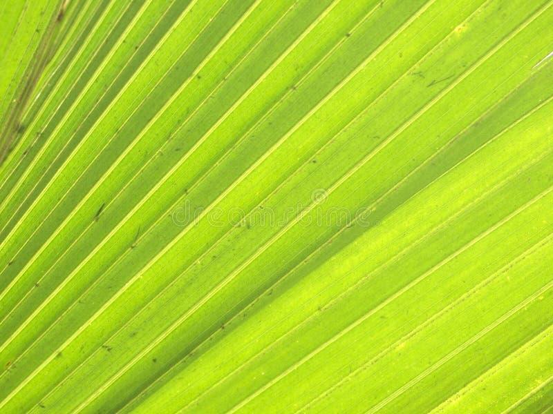 Σύσταση του πράσινου φύλλου φοινικών στοκ εικόνες