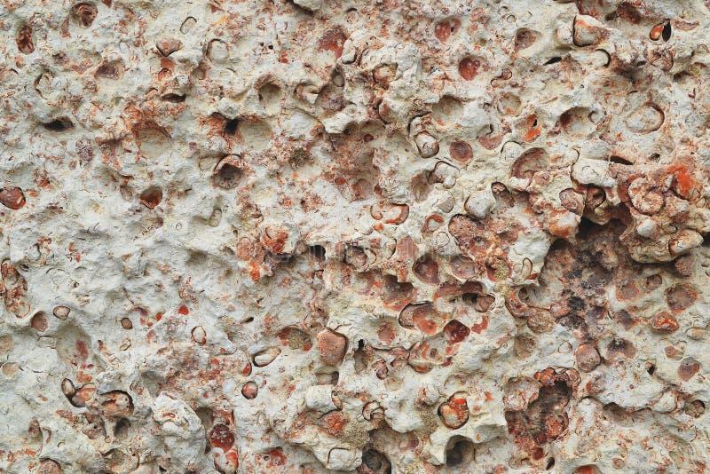 Σύσταση του τοίχου φιαγμένου από άσπρο και ρόδινο βράχο κοχυλιών ή coquina, υπόβαθρο πετρών στοκ εικόνα