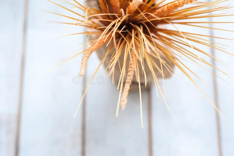 Σύσταση των αυτιών σίτου με έναν κλάδο του βαμβακιού σε ένα βάζο ενάντια σε ένα δέντρο στοκ εικόνες με δικαίωμα ελεύθερης χρήσης