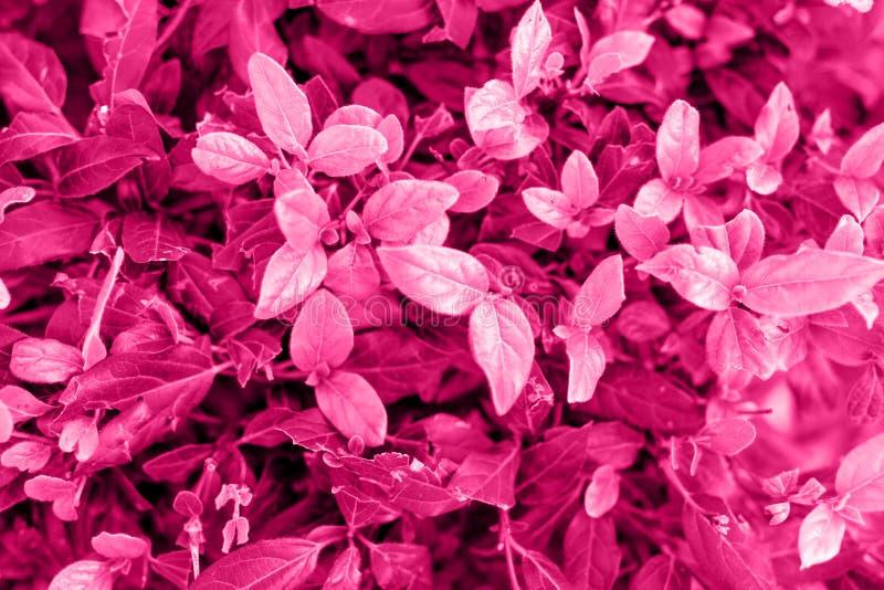 Σύσταση των διαποτισμένων ρόδινων φύλλων των διαφορετικών σκιών στοκ φωτογραφίες