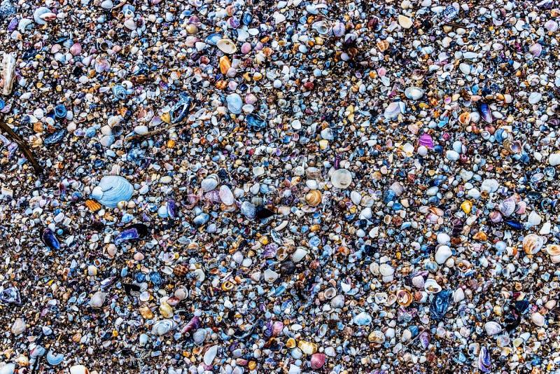 Σύσταση των θαλασσινών κοχυλιών σε Natura στην παραλία στοκ εικόνα με δικαίωμα ελεύθερης χρήσης