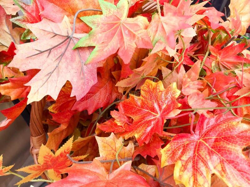 Σύσταση των όμορφων φωτεινών χρωματισμένων χαρασμένων κόκκινο φύλλων φθινοπώρου σφενδάμνου εθνικό verdure ανασκόπησης αφαίρεσης στοκ φωτογραφίες