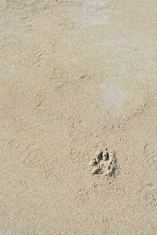 Σύσταση υποβάθρου άμμου τυπωμένων υλών ποδιών σκυλιών στοκ φωτογραφίες με δικαίωμα ελεύθερης χρήσης