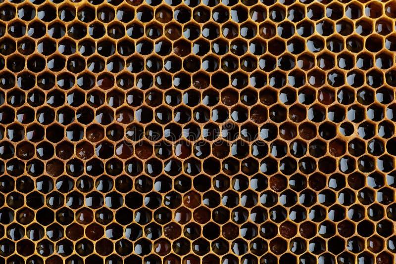 Σύσταση υποβάθρου ενός τμήματος της κηρήθρας κεριών από μια κυψέλη μελισσών που γεμίζουν με το χρυσό μέλι Έννοια μελισσοκομίας στοκ φωτογραφία με δικαίωμα ελεύθερης χρήσης