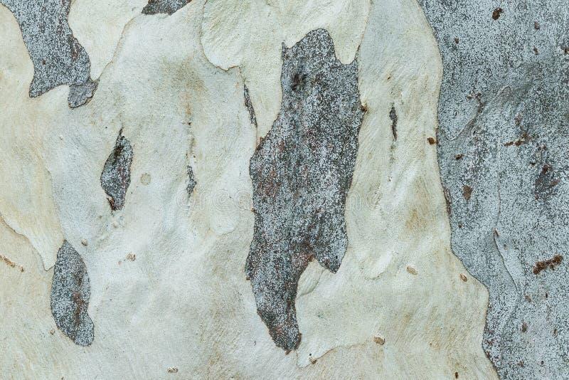 Σύσταση υποβάθρου ρυτίδων δερμάτων δέντρων στοκ φωτογραφία