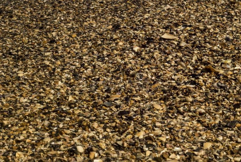 σύσταση υποβάθρου Σαββατοκύριακου τουριστών κοχυλιών παραλιών διακοπών θάλασσας ήλιων στοκ εικόνες