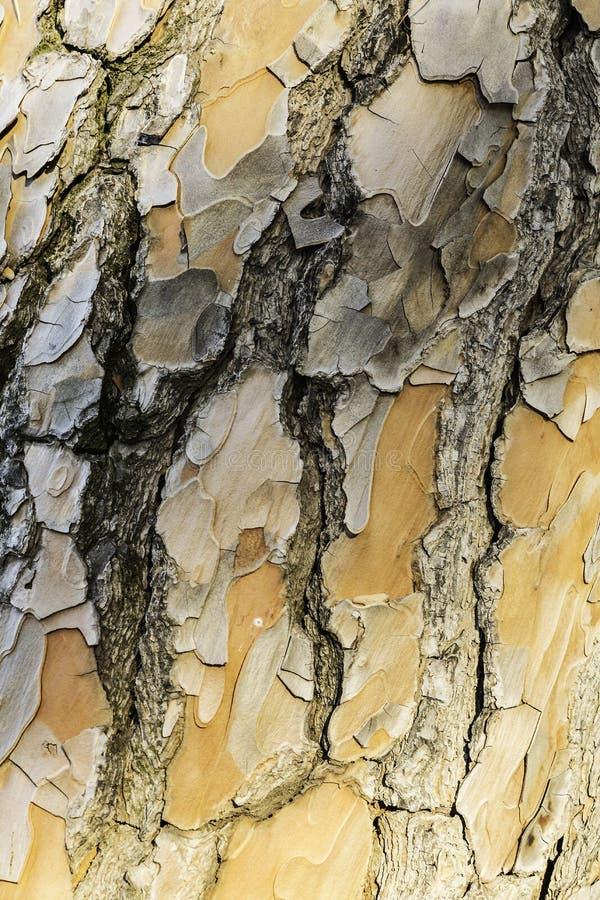 Σύσταση υποβάθρου του φλοιού δέντρων με τα στρώματα diffrents στοκ φωτογραφίες