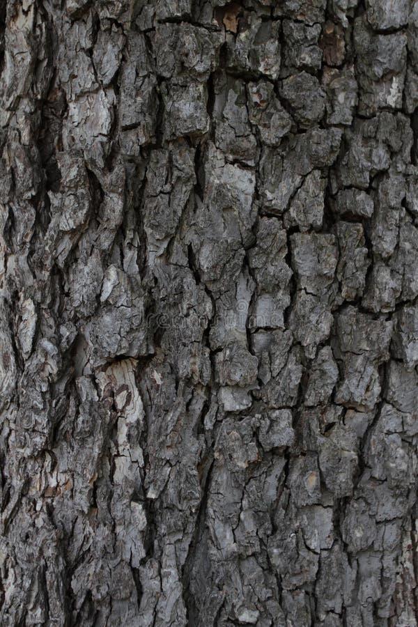 Σύσταση υποβάθρου φλοιών δέντρων Πραγματικός ξύλινος φλοιός δέντρων Σκοτεινό φυσικό σχέδιο φλοιών δέντρων Ξύλινο πρότυπο Πραγματι στοκ φωτογραφία