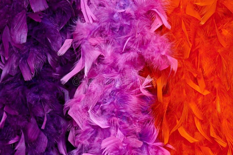 Σύσταση υποβάθρου χρωματισμένα boas με την κινηματογράφηση σε πρώτο πλάνο φτερών στοκ εικόνες με δικαίωμα ελεύθερης χρήσης