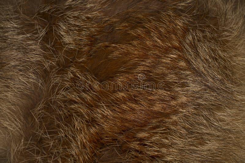 Σύσταση, υπόβαθρο από ένα προϊόν γουνών από μια κόκκινη αλεπού στοκ φωτογραφία