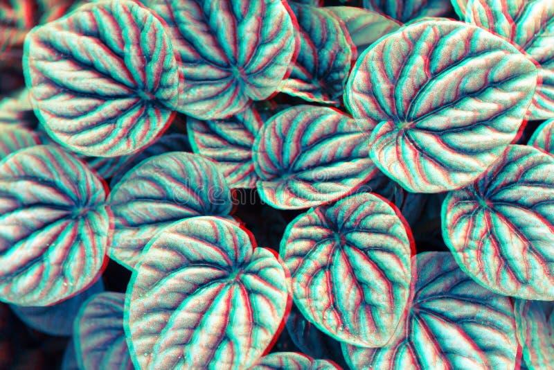 Σύσταση φύλλων ή υπόβαθρο φύλλων για το σχέδιο Μοτίβα φύλλων που εμφανίζεται φυσικός Ύφος δυσλειτουργίας στοκ φωτογραφία
