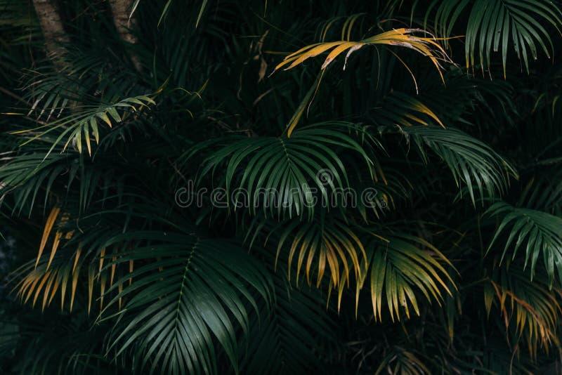 Σύσταση φύλλων φοινικών με το σκοτεινό τροπικό δασικό υπόβαθρο στοκ φωτογραφίες