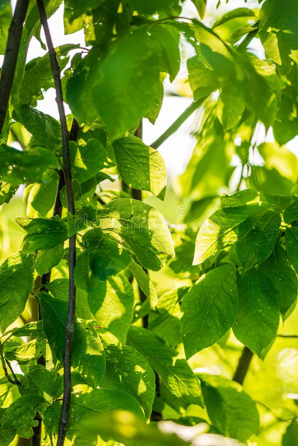 σύσταση χλόης φύλλων φυλλώματος στον πράσινο ηλιόλουστο θερινό χρόνο στοκ εικόνες