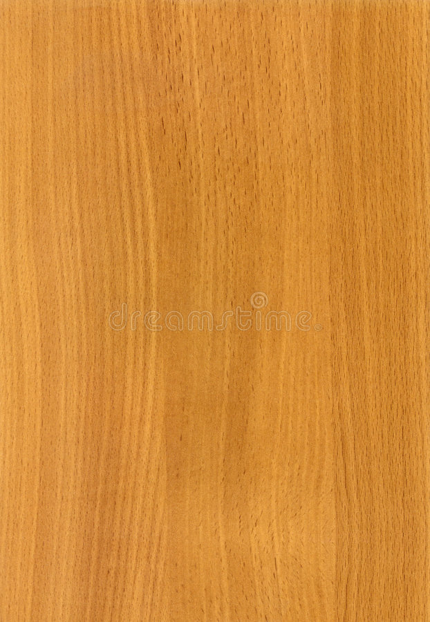 σύσταση HQ οξιών ξύλινη στοκ εικόνες