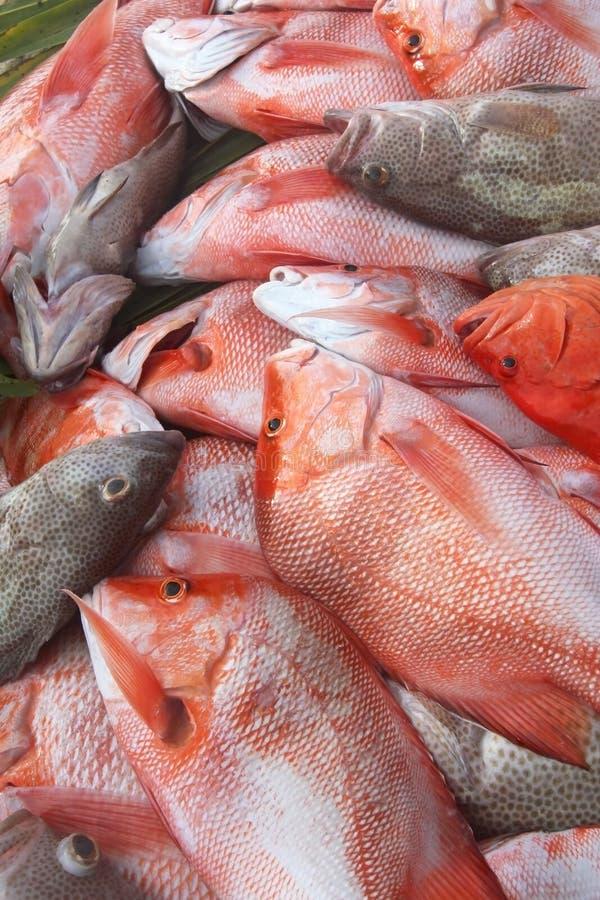 Σύλληψη του grouper και λυθρίνι ημέρας †« στοκ φωτογραφίες με δικαίωμα ελεύθερης χρήσης