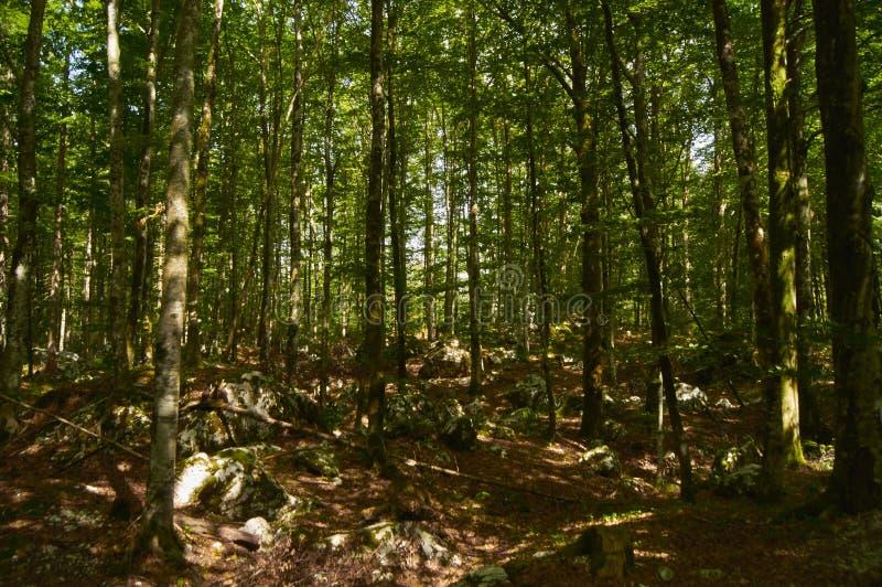 Σλοβένικο δάσος στοκ εικόνες