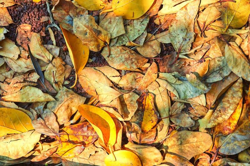 Τάπητας έννοιας Α φθινοπώρου των κίτρινων ξηρών φύλλων που βρίσκονται στο έδαφος στοκ φωτογραφία με δικαίωμα ελεύθερης χρήσης