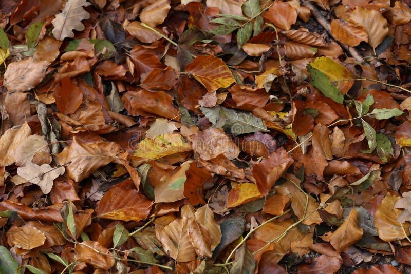 Τάπητας των φύλλων φθινοπώρου πεσμένα φθινόπωρο επίγεια στοκ φωτογραφία με δικαίωμα ελεύθερης χρήσης