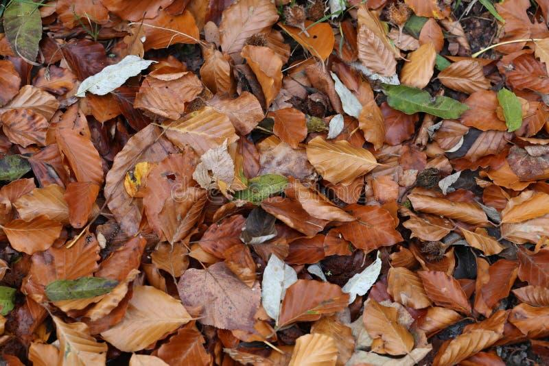 Τάπητας των φύλλων φθινοπώρου πεσμένα φθινόπωρο επίγεια στοκ εικόνες με δικαίωμα ελεύθερης χρήσης