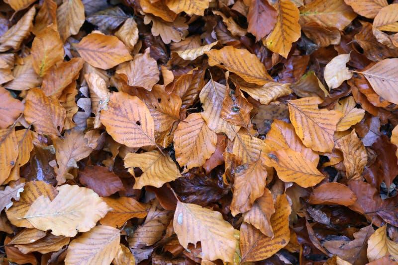 Τάπητας των φύλλων φθινοπώρου πεσμένα φθινόπωρο επίγεια στοκ εικόνα