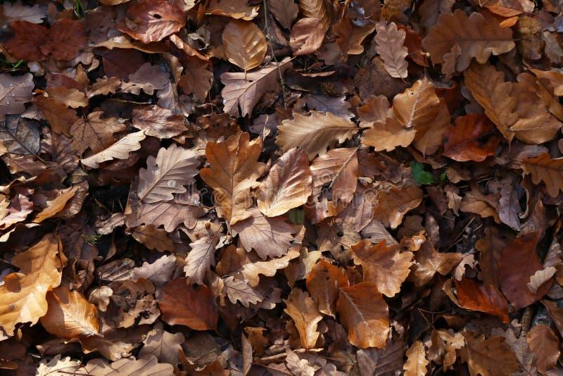 Τάπητας των φύλλων φθινοπώρου πεσμένα φθινόπωρο επίγεια στοκ εικόνες