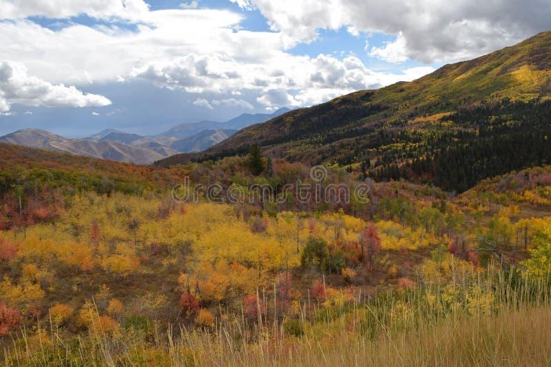 Τάπητας φθινοπώρου στοκ εικόνες