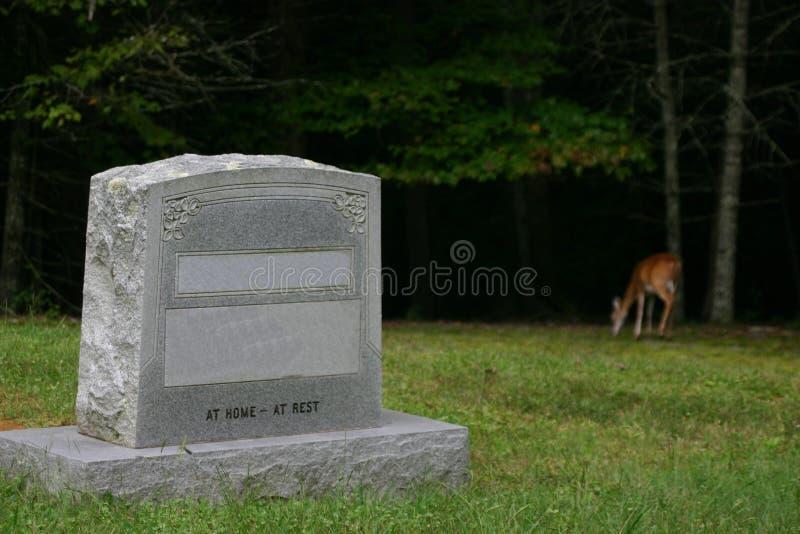 τάφος ελαφιών στοκ εικόνες με δικαίωμα ελεύθερης χρήσης