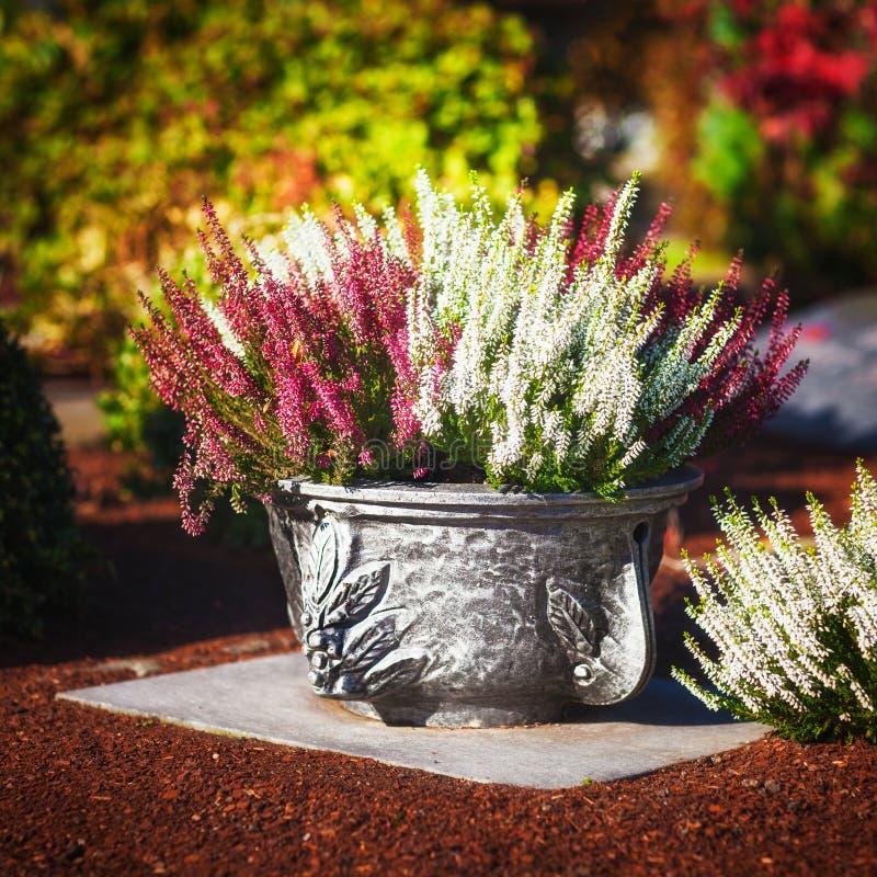Τάφος με τα λουλούδια φθινοπώρου στοκ εικόνες με δικαίωμα ελεύθερης χρήσης