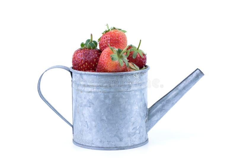 Τέλεια τα φρέσκα φρούτα φραουλών χρωματισμένο στο ασήμι πότισμα μπορεί στο άσπρο υπόβαθρο στοκ φωτογραφίες