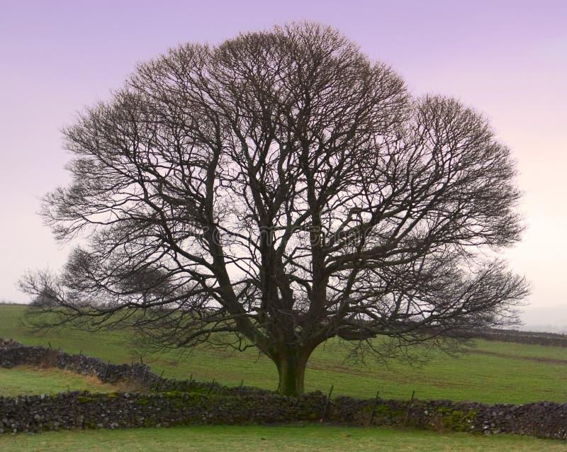 τέλειος χειμώνας δέντρων στοκ φωτογραφίες