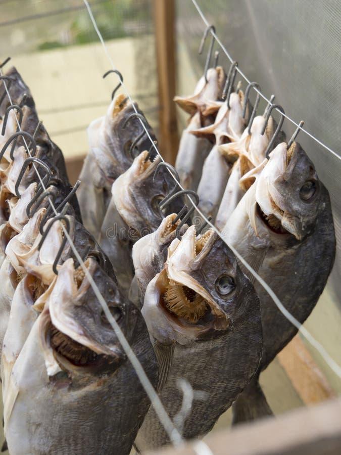 Τέλειο πρόχειρο φαγητό μπύρας - αποξηραμένα ψάρια θάλασσας στο στάδιο του μαγειρέματος στοκ φωτογραφίες