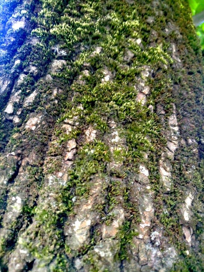 τέλειο χρώμα του δέντρου burk στοκ φωτογραφία