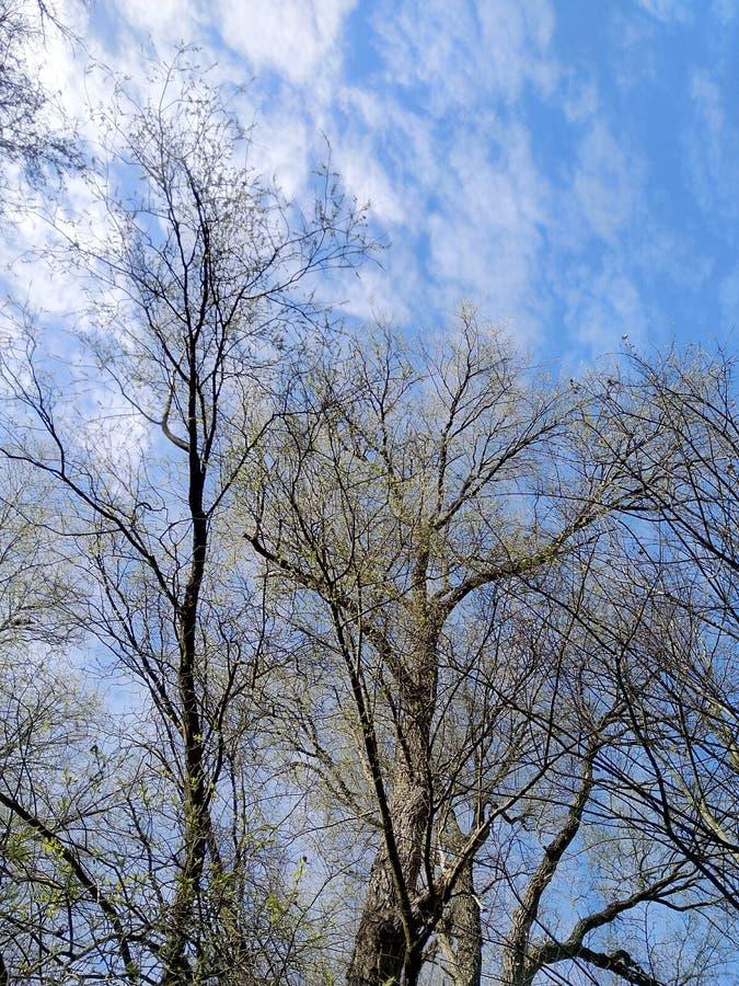 Τέλος άνοιξης του χειμώνα στοκ φωτογραφίες