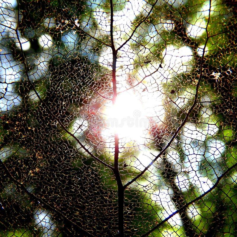 Τέλος του καλοκαιριού, ήλιος που λάμπει μέσω ενός φύλλου πτώσης στοκ εικόνα με δικαίωμα ελεύθερης χρήσης