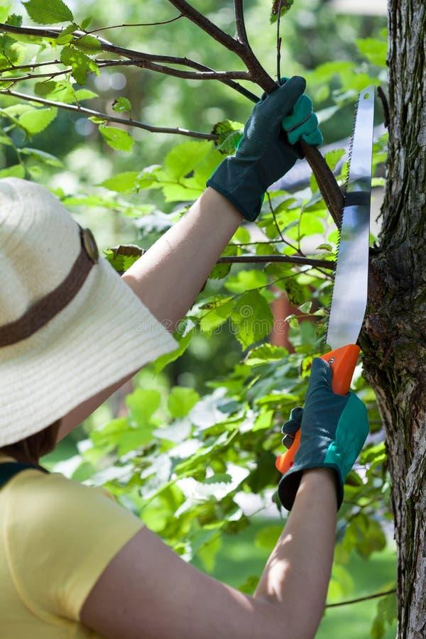 Τέμνοντες κλάδοι κηπουρών στοκ εικόνα με δικαίωμα ελεύθερης χρήσης