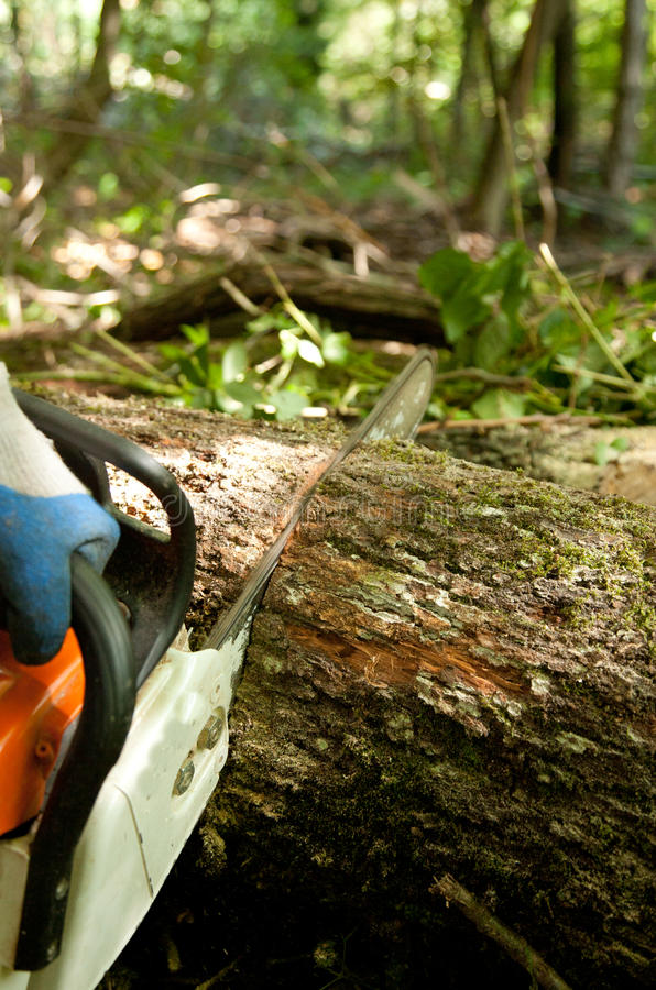 τέμνον δάσος αλυσιδοπριό στοκ φωτογραφία με δικαίωμα ελεύθερης χρήσης