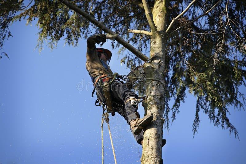 τέμνον δέντρο δενδροκόμων στοκ φωτογραφία