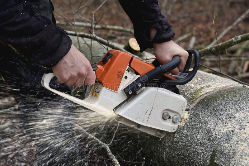 Τέμνον ξύλο αλυσιδοπριόνων στοκ φωτογραφία με δικαίωμα ελεύθερης χρήσης