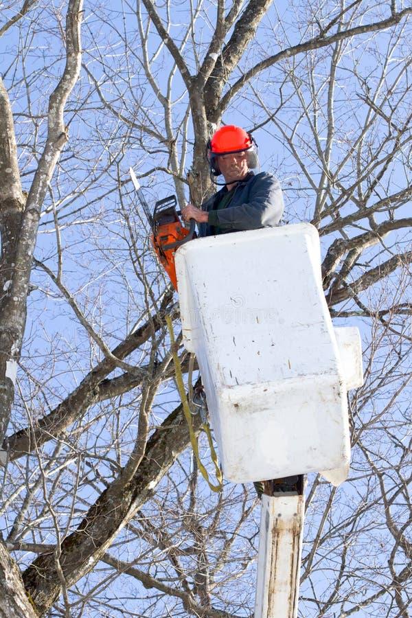 τέμνων εργαζόμενος δέντρων  στοκ εικόνα με δικαίωμα ελεύθερης χρήσης