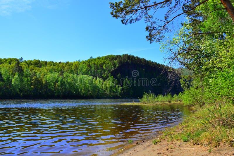 Τέντωμα άμμου Ο ποταμός μακριά στα ξύλα ανθίζοντας δέντρο μήλων Ο ποταμός UDA ο ανατολικός εδώ αυτοκρατορικός γίνοντας σιδηρόδρομ στοκ φωτογραφίες με δικαίωμα ελεύθερης χρήσης