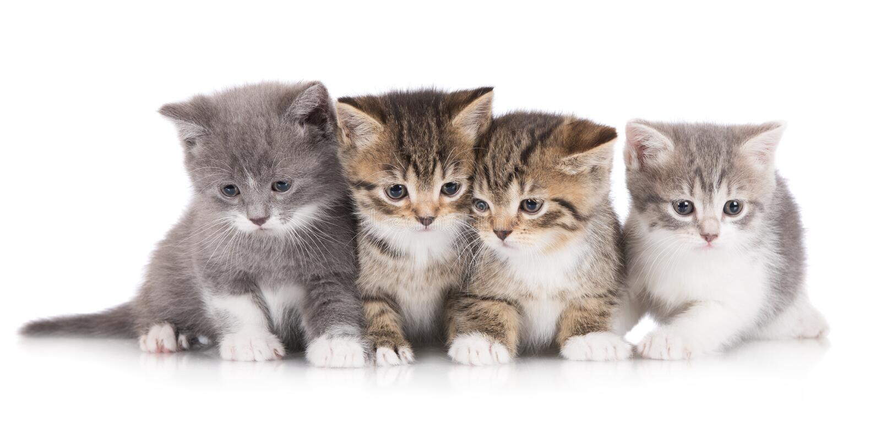 Τέσσερα λατρευτά γατάκια στοκ φωτογραφίες