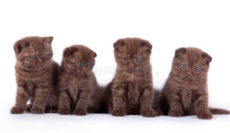 τέσσερα γατάκια σκωτσέζι& στοκ φωτογραφίες