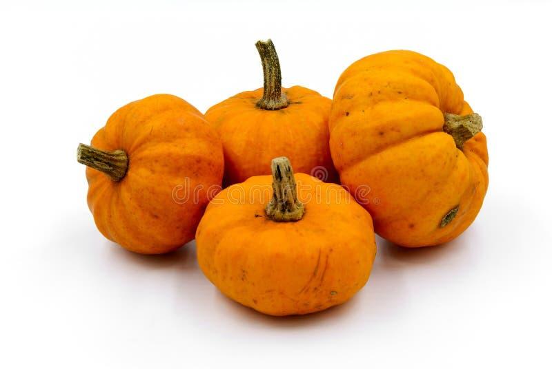 Τέσσερις αρκετά πορτοκαλιές μικρές κολοκύθες στοκ φωτογραφίες με δικαίωμα ελεύθερης χρήσης