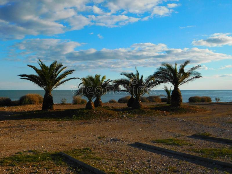 Τέσσερις φοίνικες στην παραλία στοκ φωτογραφία