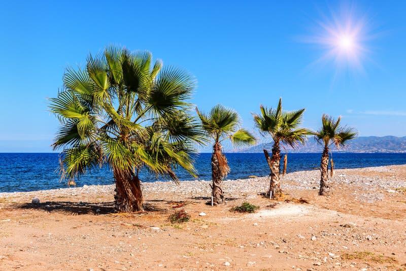 Τέσσερις φοίνικες στην παραλία στοκ φωτογραφίες